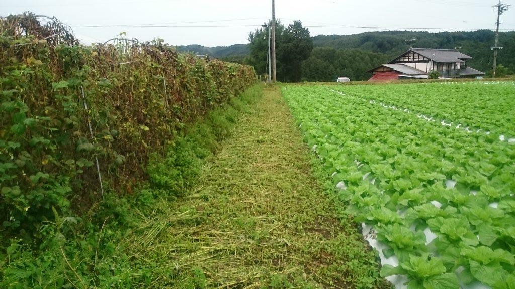 あさひや農場の無農薬と農薬使用圃場・作物の分別について